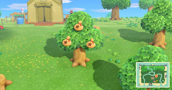 ACNH | Money Tree Guide - How to Grow & Limit | Animal Crossing - GameWith