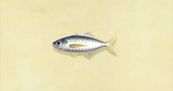 Horse mackerel - How To Catch & Price