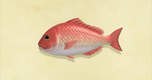 ACNH   Red Snapper - How To Catch & Price   Animal Crossing - GameWith
