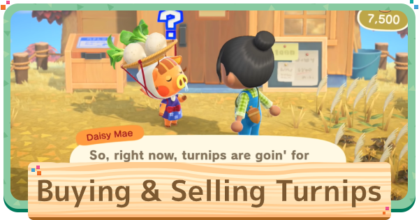 Turnip Prices Guide - Best Time To Sell