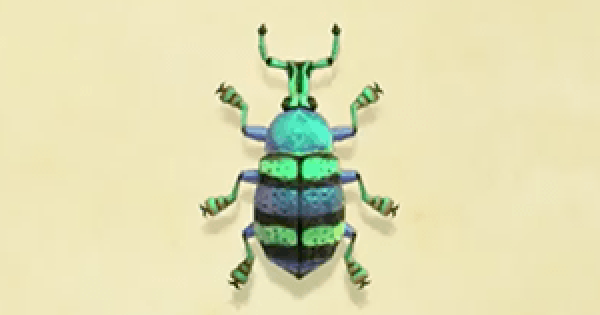 ACNH | Blue weevil beetle - How To Catch & Price | Animal Crossing - GameWith
