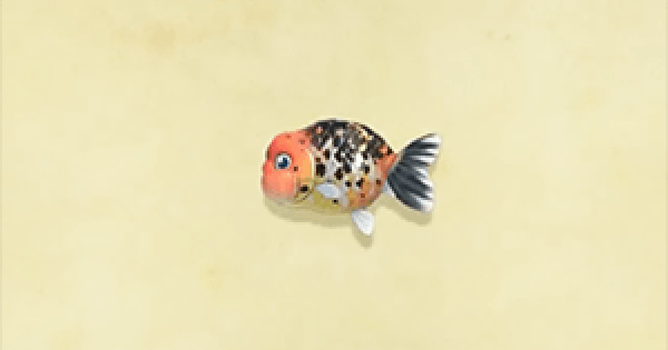 ACNH | Ranchu goldfish - How To Catch & Price | Animal Crossing - GameWith