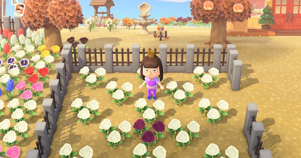 Animal Crossing Purple Roses How To Get Breed Acnh Gamewith