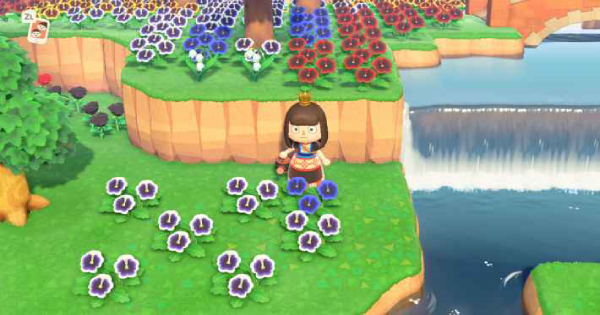 ACNH | Blue Pansy - How to Get & Breed | Animal Crossing - GameWith