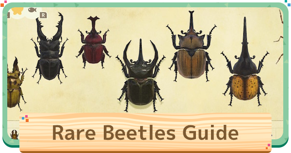 ACNH | Beetle Guide - How To Catch Stag & Horned Beetles | Animal Crossing - GameWith