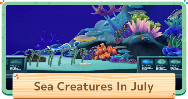 July - Sea Creatures List