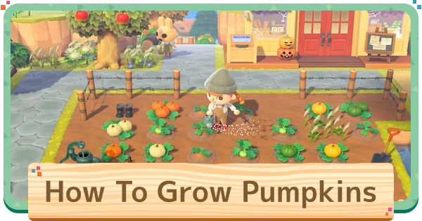 Pumpkin - How To Grow & Uses