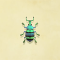 Blue weevil beetle