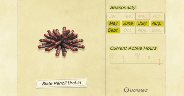 Crayon Urchin Ardoise