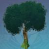 Mature Cuihua Tree