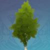 Green Knotwood Tree