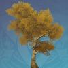 Golden Irontrunk Tree