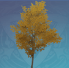 Amber Pearlroot Tree
