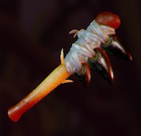 Insect Axe