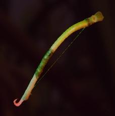 Sprig Bow