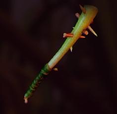 Spiky Sprig