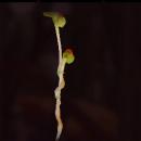 Plant Lamp