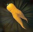Endura Carrot