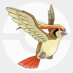 Pidgeot icon
