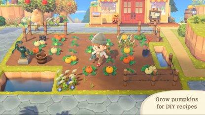 Grow Pumpkins For DIY Furniture