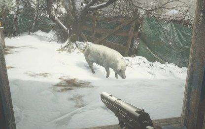 Pure White Pig