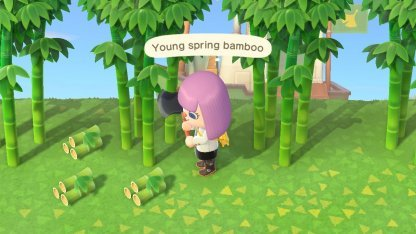 young spring bamboo