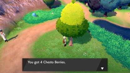 Chesto Berry Route 5