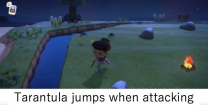 tarantula jumping