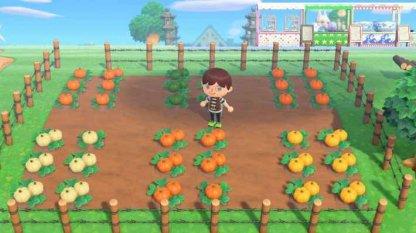 Grow Pumpkin From Seeds