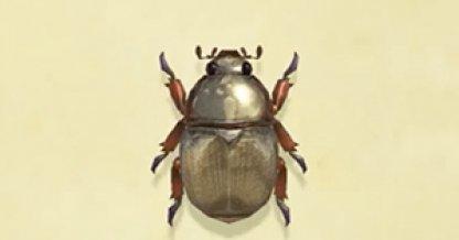 Fixed Scarab Beetle Glitch