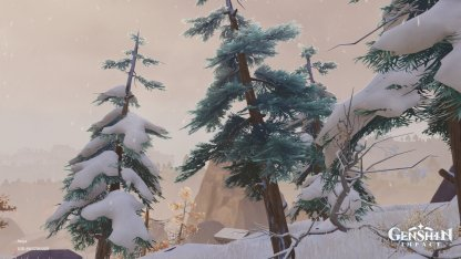 Pine Trees - What They Look Like