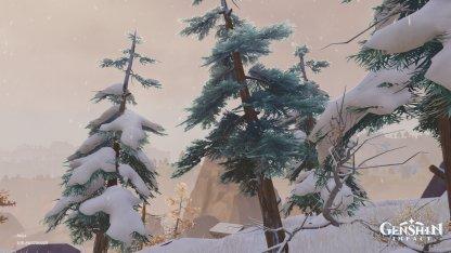 Pine Trees - What It Looks Like