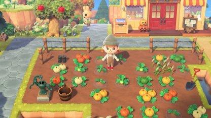 4 Types Of Pumpkins