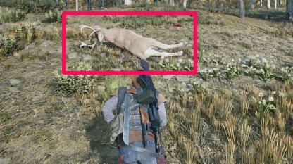 Hunt Deer Or Wild Animals To Create Bait