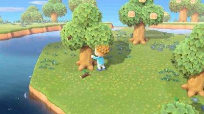 Shake Trees To Make Them Drop