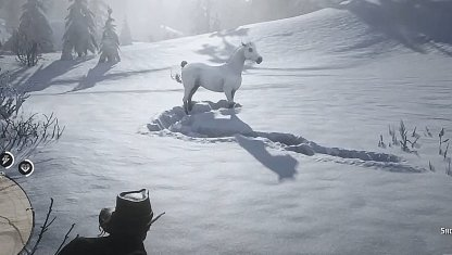 Red Dead Online, Differences Between Horses In RDR2 & Red Dead Online