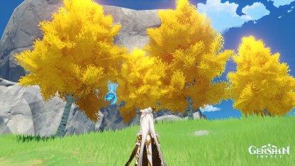 Birch Trees - What It Looks Like